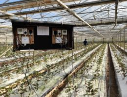 Onderzoek naar klimaatneutraal verwarmen van pioenrozen